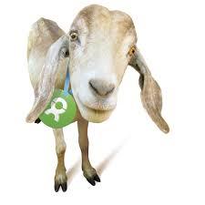 Oxfam-goat